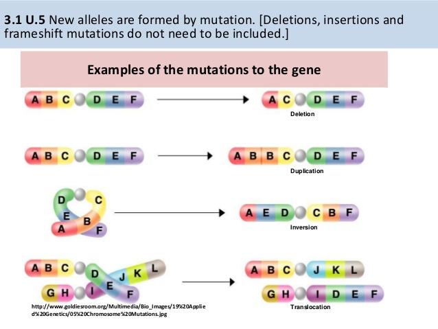 31-genes-10-638